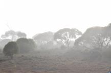 An eerie morning fog.