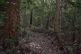 Walking Five Islands Track