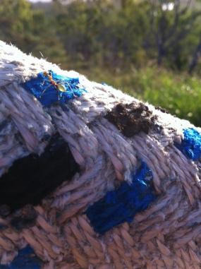 Green tree ants, Bowen, Queensland