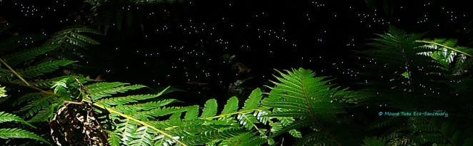 Glow_Worms_Tauranga_New_Zealand
